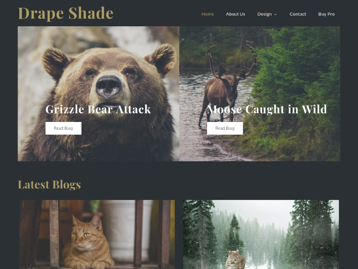 Drape Shade Preview Wordpress Theme - Rating, Reviews, Preview, Demo & Download